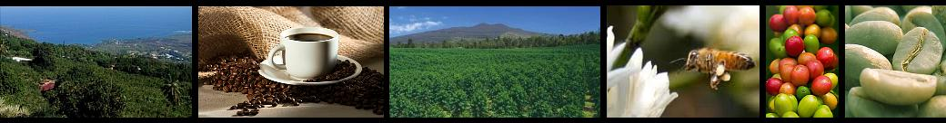 Kona Coffee estate and farms on the Big Island of Hawaii